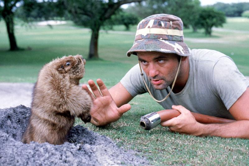 Bill Murray confronts a destruction-minded gopher in 'Caddyshack' (Photo: Warner Bros./ Courtesy: Everett Collection.)