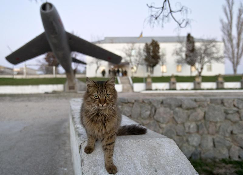 A cat is back dropped by an early model MIG Russian fighter jet decorating the headquarters of the Belbek air base, outside Sevastopol, Crimea, Friday, March 21, 2014. The base commander Col. Yuliy Mamchur said he was asked by the Russian military to turn over the base but is unwilling to do so until he receives orders from the Ukrainian defense ministry.(AP Photo/Vadim Ghirda)