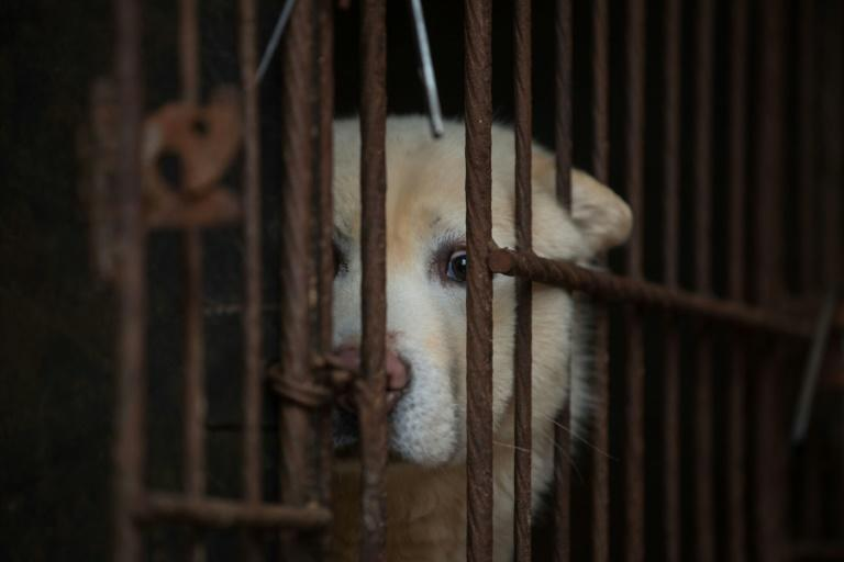 Taiwan banned the slaughter of cats and dogs for food in 2001, although there was no penalty on eating or buying the meat