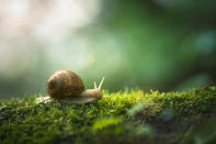 9. A snail can sleep for three years.