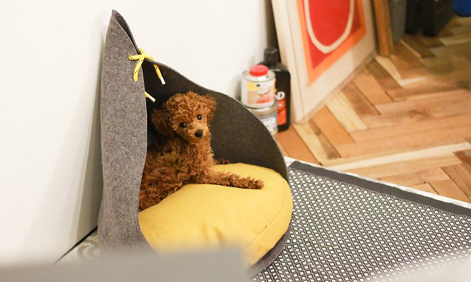 """<p>And in order to do just, that it's released a line of five minimalist, modern dog dens with an architectural bent.<i>(Photo: <a href=""""http://www.badmarlon.com/"""">Bad Marlon</a>)</i><br /></p>"""