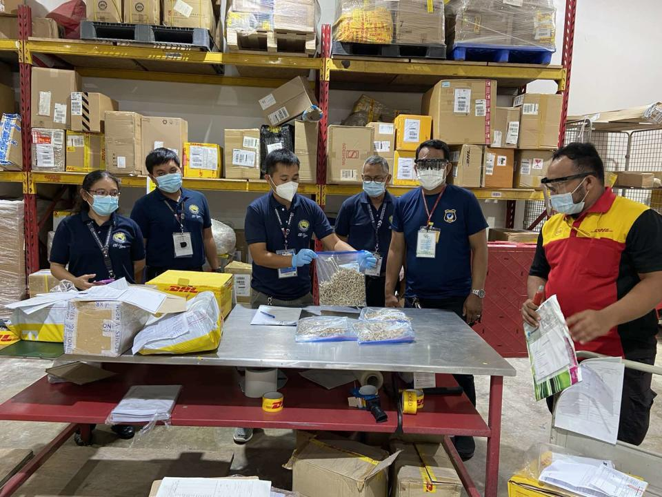 Customs officers at the Subport of Mactan holding a whole mess o' sharks' teeth (boc.gov.ph)
