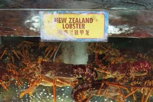 New Zealand Lobster tank