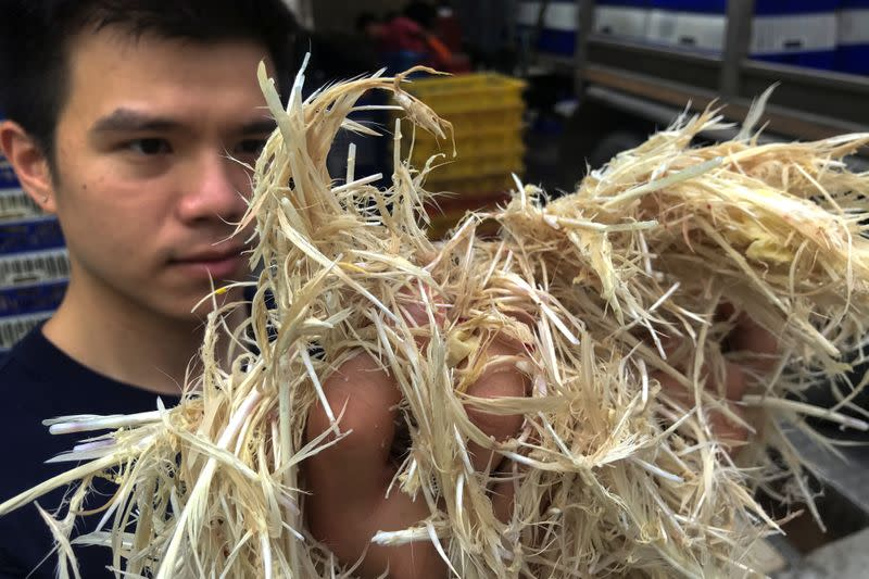 Thai inventor Sorawut Kittibanthorn hold ups chicken feathers at a slaughter house in Nakorn Pathom province