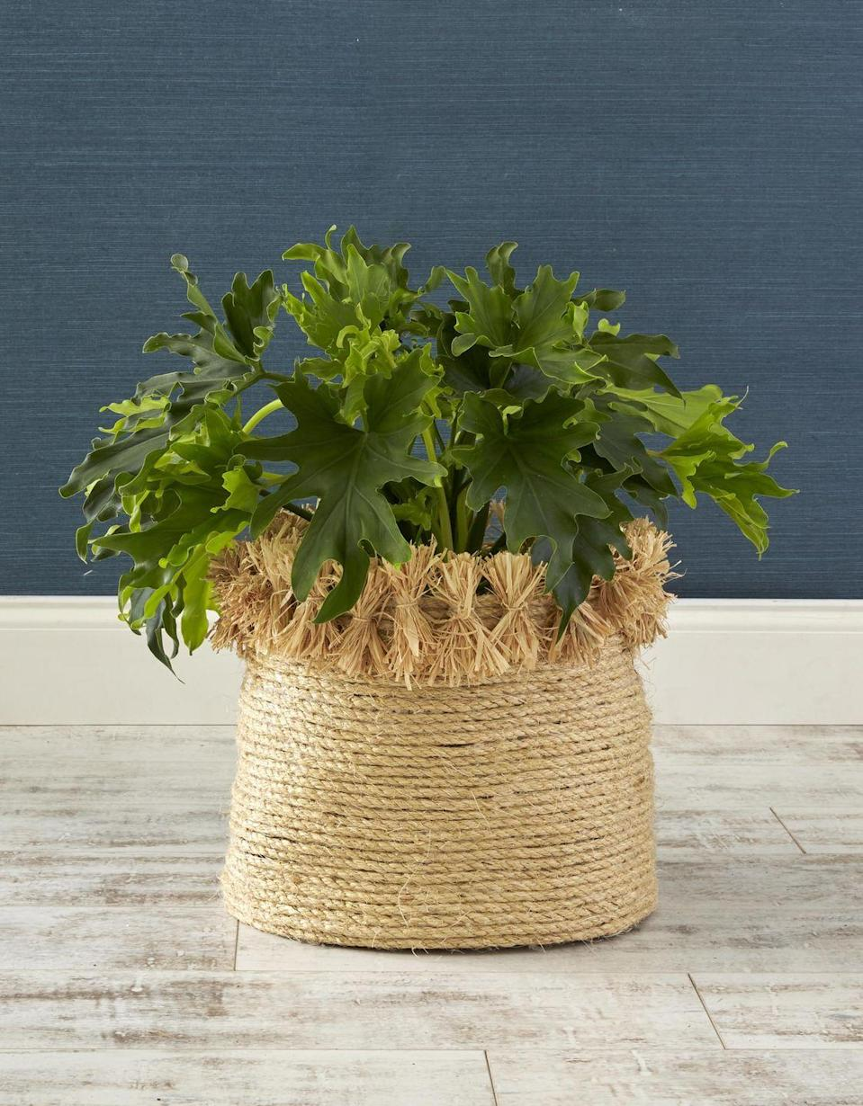<p>Cover up unsightly clay pots with a DIY coiled rope basket. Only a few hardware store supplies needed.</p><p><strong>To make:</strong> Start by coiling 1/2-inch-thick sisal rope into a mat, affixing the rope together with hot-glue as you work. Once you have a mat, start working upward by gluing the rope on top of itself to create the basket. Create fringe by tying lengths of raffia together, pinching in the center; glue to basket.<br></p>