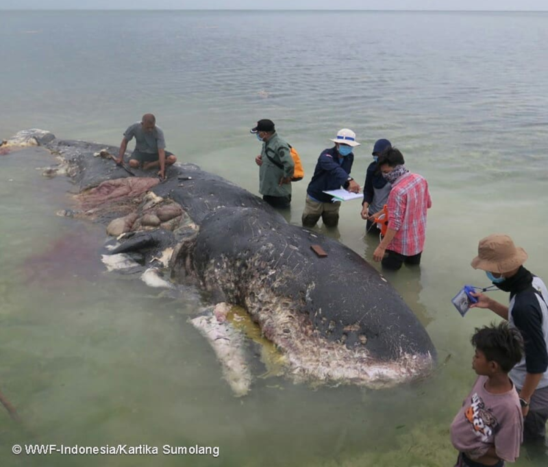 Dead Whale Had 1,000 Pieces Of Plastic Inside Its Stomach - Including Flip-Flops