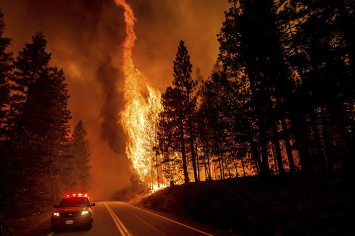 Flames leap from trees as the Dixie Fire jumps Highway 89 north of Greenville, Calif., Aug. 3, 2021. (AP Photo/Noah Berger)
