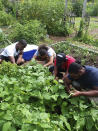 """This photo provided by Raymond Figueroa, Jr. shows members of the community-based Alternatives-to-Incarceration (ATI) initiative at the Brook Park Youth Farm who are involved in growing food as well as the peppers for """"The Bronx Hot Sauce."""" Interest in gardening has grown around the country. And urban gardeners say it's particularly important for the health and resiliency of city neighborhoods. (Raymond Figueroa, Jr. via AP)"""