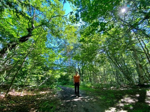 Forest bathing doesn't require a swimsuit — just some comfortable shoes and an open mind. (Jane Robertson/CBC - image credit)