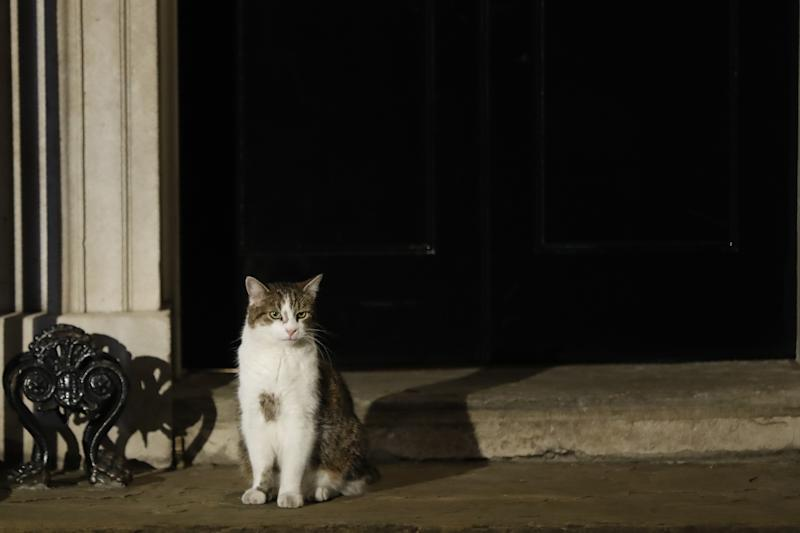 Larry the cat sits outside 10 Downing Street in London on July 24, 2019. - Boris Johnson took charge as Britain's prime minister on Wednesday, on a mission to deliver Brexit by October 31 with or without a deal. (Photo by Tolga AKMEN / AFP) (Photo credit should read TOLGA AKMEN/AFP/Getty Images)