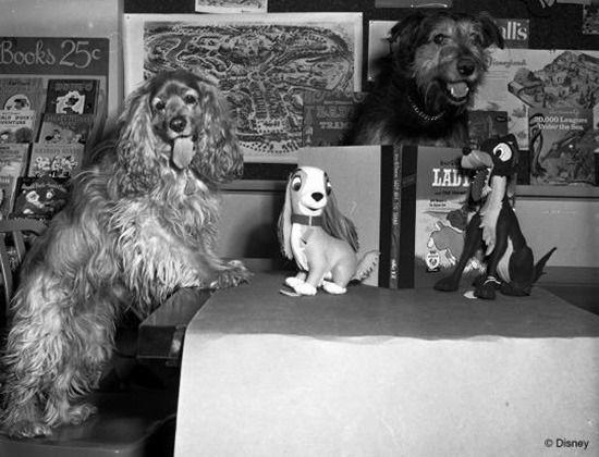 Dogs modeling in the Disney studio for 'The Lady and the Tramp'. Photo: Disney