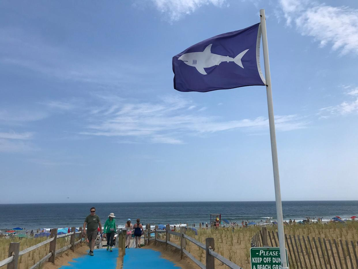 A flag is raised on Nauset Beach in Orleans, Massachusetts, alerting beach-goers that sharks are in the area.
