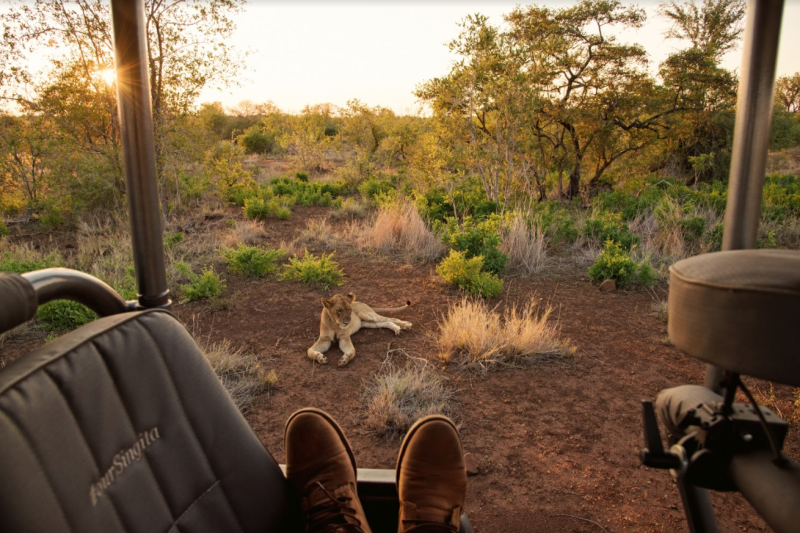 Hosted safari game drive. Photo: Supplied/South Africa Tourism