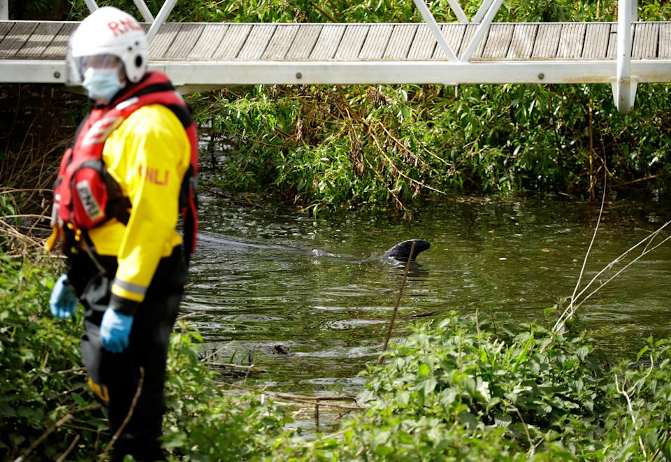 Port staff were joined by firefighters, coast guard members and marine animal rescue diversAP
