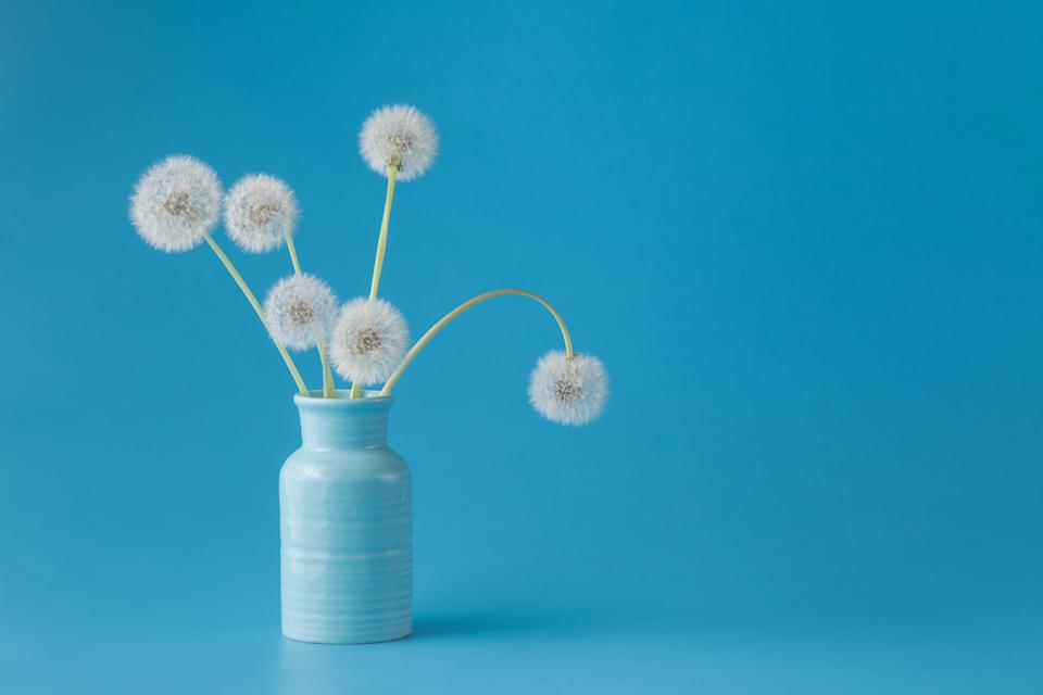 Dandelions in vase on blue background