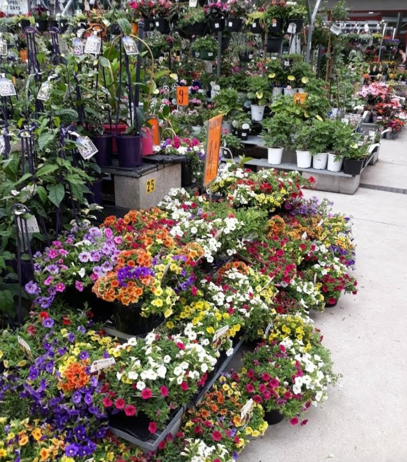 Flowers pictured inside a Bunnings. Source: Google Maps/jenny kim