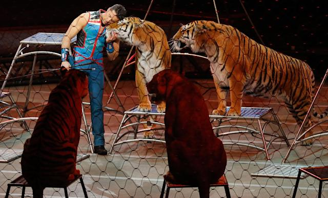 "<p>Big cat trainer Alexander Lacey hugs one of the tigers during the final show of the Ringling Bros. and Barnum & Bailey Circus, Sunday, May 21, 2017, in Uniondale, N.Y. Ringling's circus began its final show Sunday evening after 146 years of wowing audiences with its ""Greatest Show on Earth."" (AP Photo/Julie Jacobson) </p>"