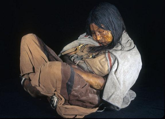 Three Incan mummies sacrificed 500 years ago were regularly given drugs and alcohol before their death, particularly the eldest child called the Maiden (shown here), to make them more compliant, researchers have found.