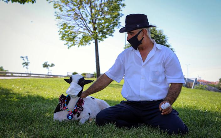 A lamb called Boncuk, who is looked after by corn seller Mehmet Besir Sahin, wears a medical mask in Istanbul, Turkey - Anadolu