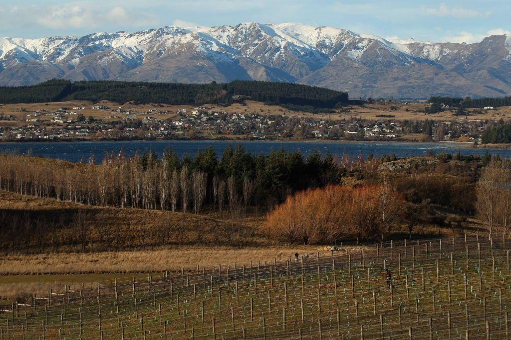 <b>OTAGO, NEW ZEALAND </b><br>A man works on his vineyard next to Lake Wanaka in Wanaka, New Zealand. In the snowy shadow of the spectacular Southern Alps, these vineyards in the Otago district produce some of New Zealand's most famous wines.