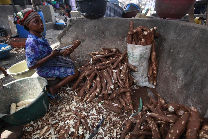 In this photo taken Friday, May 3, 2013. a woman peels cassava to make cassava flour in a Market in Lagos, Nigeria. Scientists say a disease destroying entire crops of cassava has spread out of East Africa into the heart of the continent, is attacking plants as far south as Angola and now threatens to move west into Nigeria, the world's biggest producer of the potato-like root that helps feed 500 million Africans. (AP Photo/Sunday Alamba)