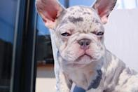 """<p>Perrie introduced the world to her new puppy in March 2020, and boy is he a cutie. </p><p><a href=""""https://www.instagram.com/p/B-PpauljAG4/"""" rel=""""nofollow noopener"""" target=""""_blank"""" data-ylk=""""slk:See the original post on Instagram"""" class=""""link rapid-noclick-resp"""">See the original post on Instagram</a></p>"""