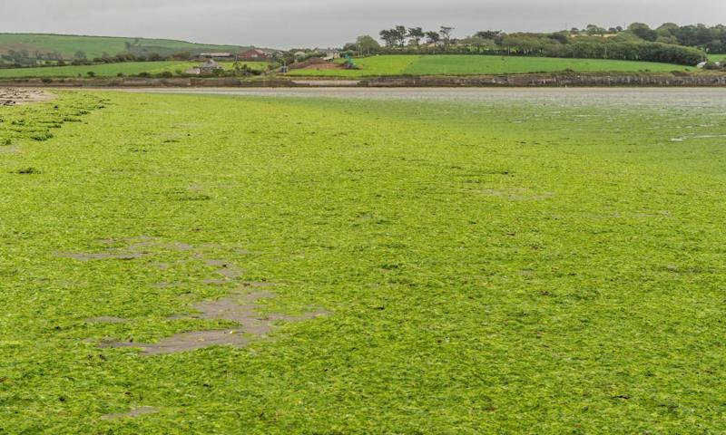 'We've crossed a threshold': has industrial farming contributed to Ireland's water crisis?