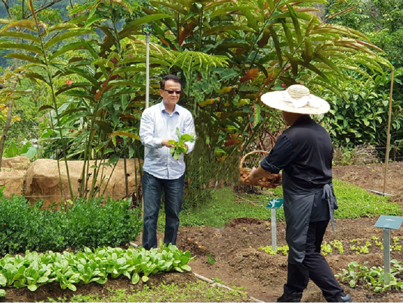 Tan Sri Dr Jeffrey Cheah picking out fresh vegetables at Sunway City Ipoh's organic farm. ― Picture courtesy of Sunway