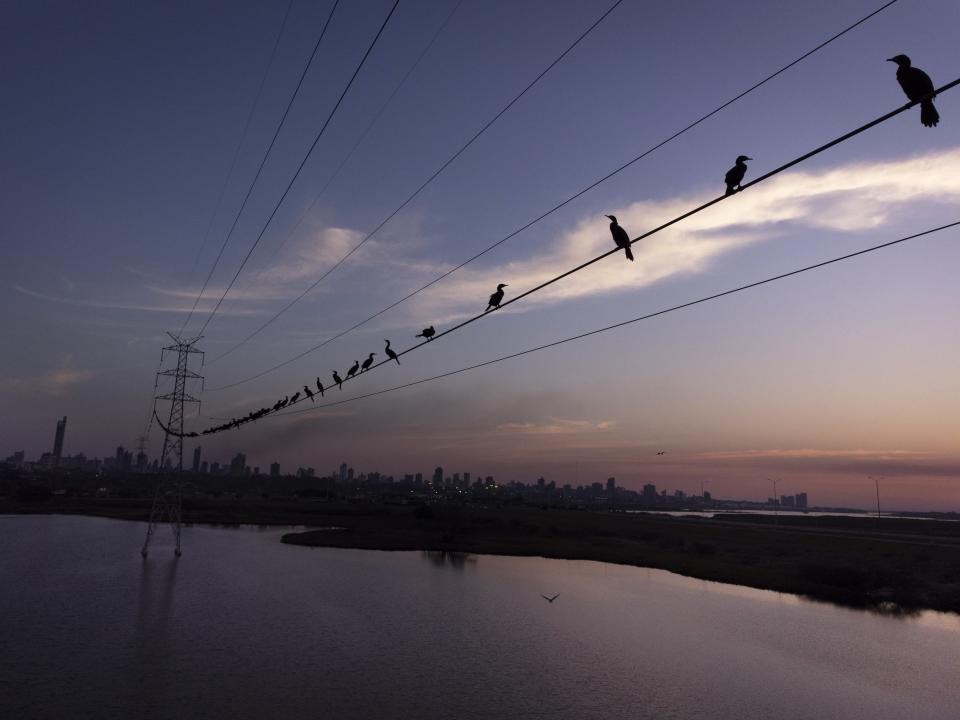 Neotropic cormorants roost on a high voltage cable at sunset near the Paraguay River, in Asuncion, Paraguay, Saturday, Aug. 14, 2021. (AP Photo/Jorge Saenz)