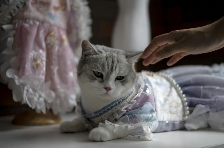Catwalk: Pet clothing designer inspired by ancient Chinese beauties