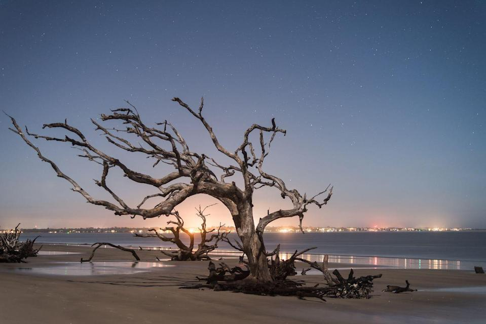<p>An entirely self-governing, self-sustaining island located off the Georgian coast, Jekyll Island is known primarily for its driftwood beaches that give the coast an eerie yet beautiful veneer. </p>