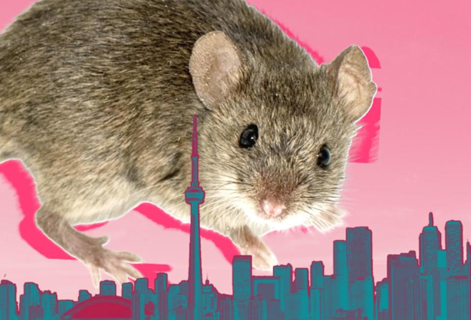 New study finds city mammals are getting larger