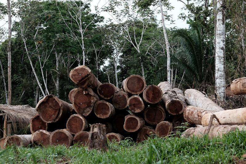 Logs in the forest in Xapuri, Acre State, in northwestern Brazil. (AFP Photo/YASUYOSHI CHIBA)