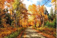 """<p>In many areas, October also brings stunning fall foliage. A perfect way to embrace the season is to drive and observe the changing leaves. Better yet, get outside and fully immerse yourself in autumn with a nature hike. </p><p><strong>More: </strong><a href=""""https://www.townandcountrymag.com/leisure/travel-guide/a10263833/fall-foliage-in-new-england/"""" rel=""""nofollow noopener"""" target=""""_blank"""" data-ylk=""""slk:15 Incredible Spots to See Fall Foliage Across New England"""" class=""""link rapid-noclick-resp"""">15 Incredible Spots to See Fall Foliage Across New England</a></p>"""