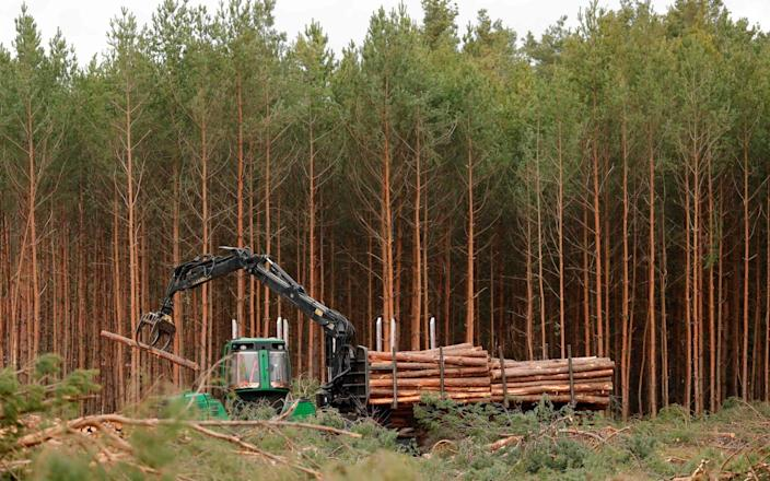 Pine logs piled up on the site where US electric car giant Tesla is building its new car factory, in Gruenheide near Berlin - ODD ANDERSEN/AFP