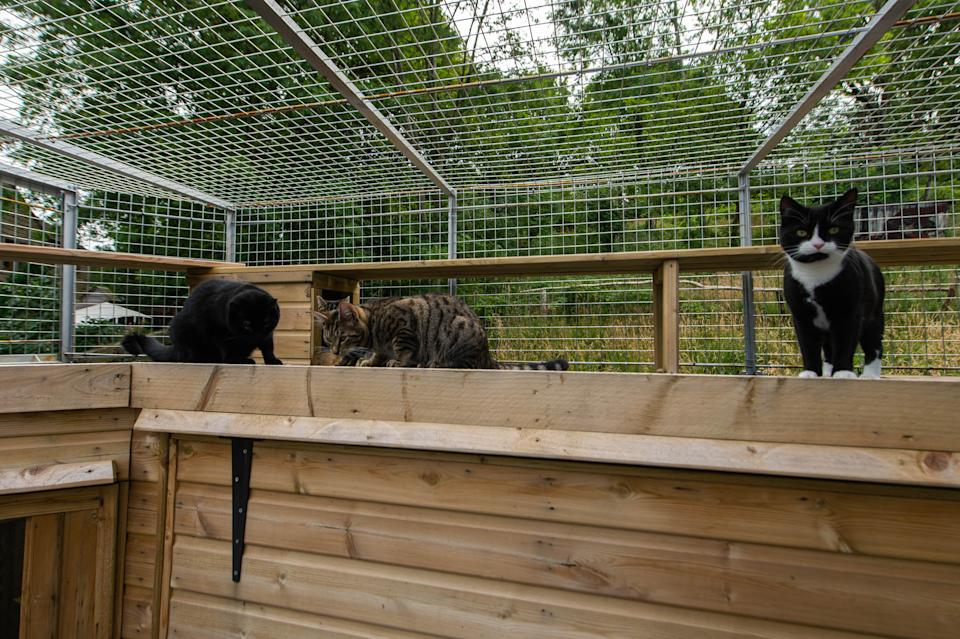 The cage is an enclosed space for Sue Haworth's four cats (Picture: SWNS)