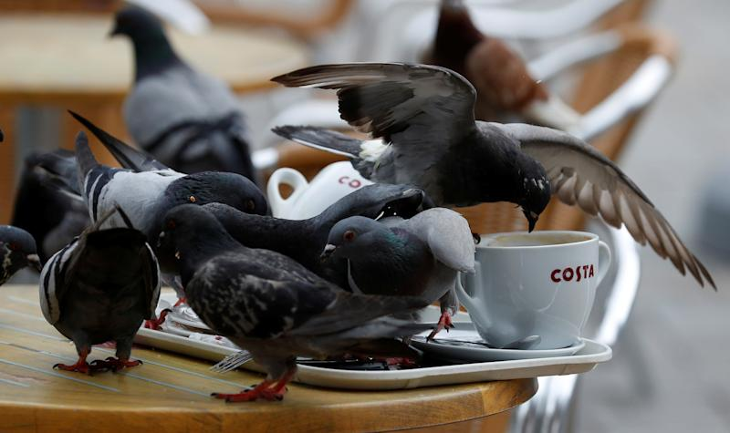 Pigeons sit on a table at a branch of Costa Coffee in the British overseas territory of Gibraltar, historically claimed by Spain, April 21, 2017. Picture taken April 21, 2017. REUTERS/Phil Noble