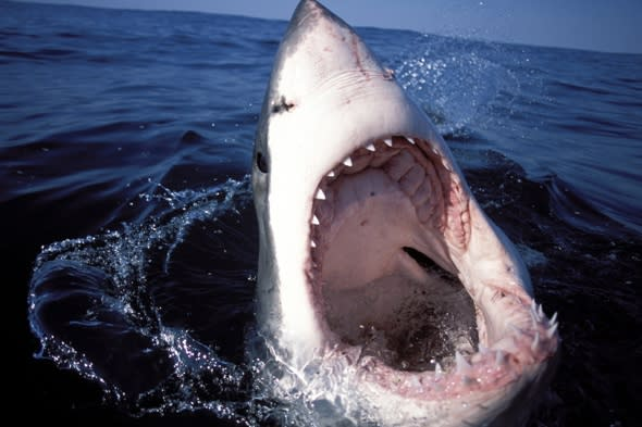 Sharks nine times more likely to kill men than women