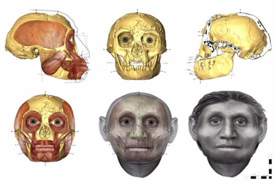 Scientists have reconstructed the face of a 'real-life Hobbit' whose skelton was found in Indonesia (Image: University of Wollongong)