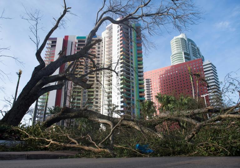 A fallen tree toppled by Hurricane Irma blocks a street in downtown Miami