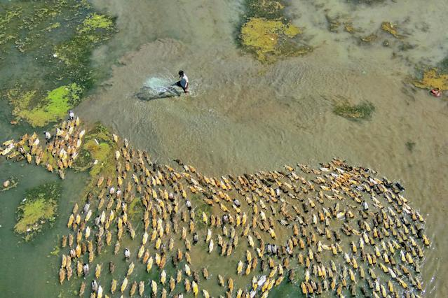 "<p>Rafeur Rahman said, ""Farmers originally found the river perfect for farming ducks."" (Photo: Rafeur Rahman/Caters News) </p>"