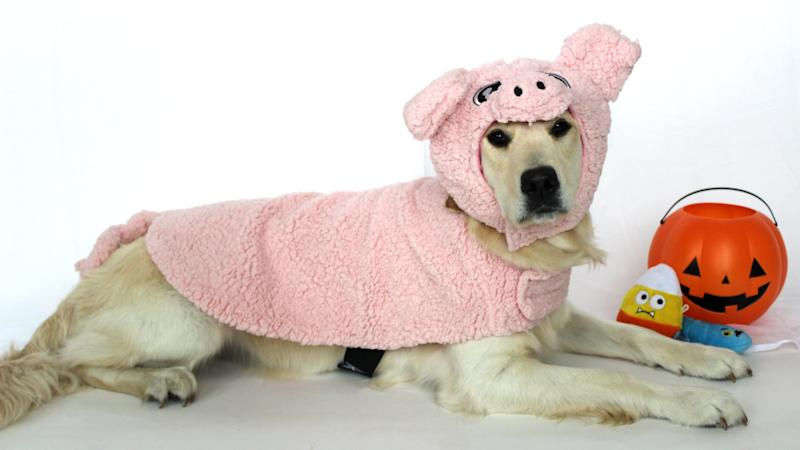 Is she not the cutest little piggy you've ever seen?