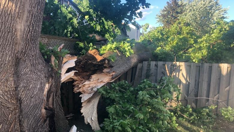 Toronto still dealing with handful of power outages following Wednesday's storm