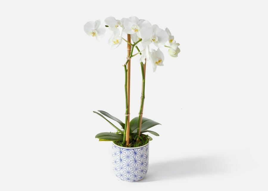 """<p>We love everything about <a href=""""https://www.popsugar.com/buy/Murano-White-Orchid-569160?p_name=The%20Murano%20White%20Orchid&retailer=urbanstems.com&pid=569160&price=75&evar1=casa%3Aus&evar9=46127505&evar98=https%3A%2F%2Fwww.popsugar.com%2Fhome%2Fphoto-gallery%2F46127505%2Fimage%2F47428777%2FMurano-White-Orchid&list1=shopping%2Cgift%20guide%2Cflowers%2Chouse%20plants%2Cplants%2Cmothers%20day%2Cgifts%20for%20women&prop13=api&pdata=1"""" class=""""link rapid-noclick-resp"""" rel=""""nofollow noopener"""" target=""""_blank"""" data-ylk=""""slk:The Murano White Orchid"""">The Murano White Orchid</a> ($75), including its Italian-inspired pot. </p>"""