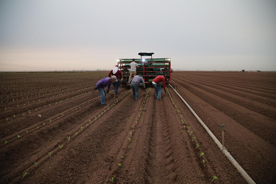 Field workers prepare the fields for growing melons. (Christine Romo / NBC News)