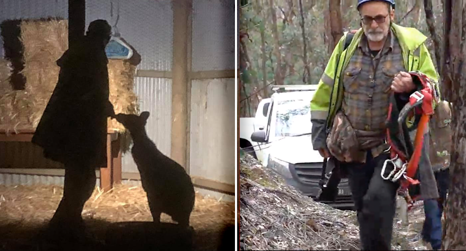 Two images of Manfred Zabinskas. Left - him with a kangaroo. Right - him carrying rescue gear.
