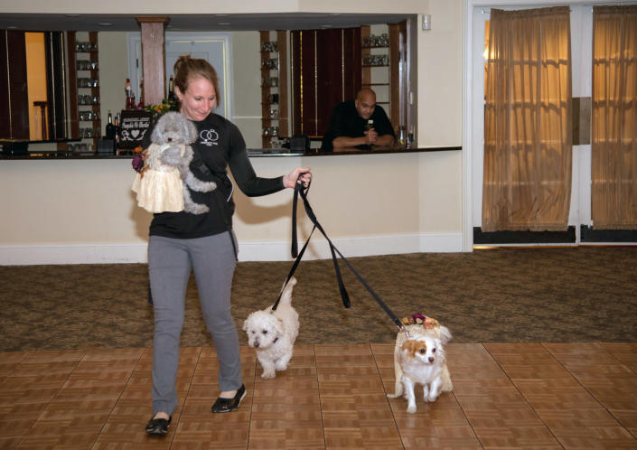 This Oct. 27, 2017 photo shows Veronica Silva as she handles the dogs of Kelly Curry and Patrick St. Onge at their wedding in Haddam, Conn. Silva is owner of Pawfect for You, a service that handles pets at weddings. It's no longer unusual for brides and grooms to include pets in their wedding photos or even in the ceremony. But it can be tough to manage that along with everything else. (Jeffrey Herget/Studio 393 via AP)