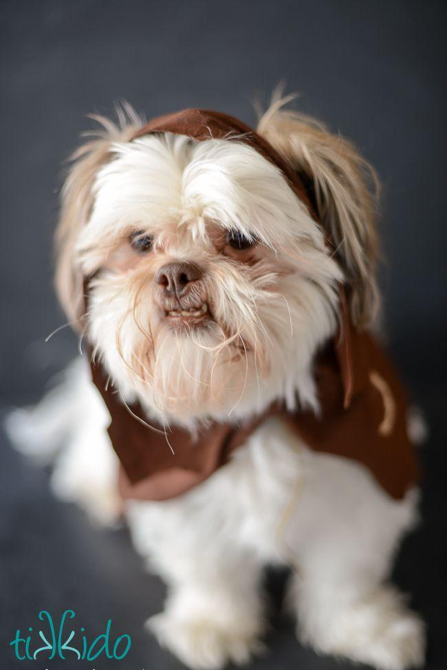 """<p>Yep, the force can even be strong in your furry friend. Give your pooch some galactic glam with a no-sew Ewok ensemble—and bust out your camera before it gets pawed off. </p><p><strong>Get the tutorial at <a href=""""https://tikkido.com/blog/Ewok-no-sew-dog-costume-tutorial"""" rel=""""nofollow noopener"""" target=""""_blank"""" data-ylk=""""slk:Tikkido"""" class=""""link rapid-noclick-resp"""">Tikkido</a>. </strong></p><p><strong><a class=""""link rapid-noclick-resp"""" href=""""https://www.amazon.com/Brown-Spandex-Stretch-Jersey-Fabric/dp/B00OYK06A6/?tag=syn-yahoo-20&ascsubtag=%5Bartid%7C10050.g.21287723%5Bsrc%7Cyahoo-us"""" rel=""""nofollow noopener"""" target=""""_blank"""" data-ylk=""""slk:SHOP BROWN FABRIC"""">SHOP BROWN FABRIC</a><br></strong></p>"""