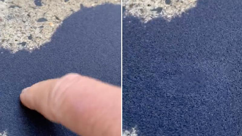 The woman touching the mound, causing thousands of bugs to move.Source: Facebook