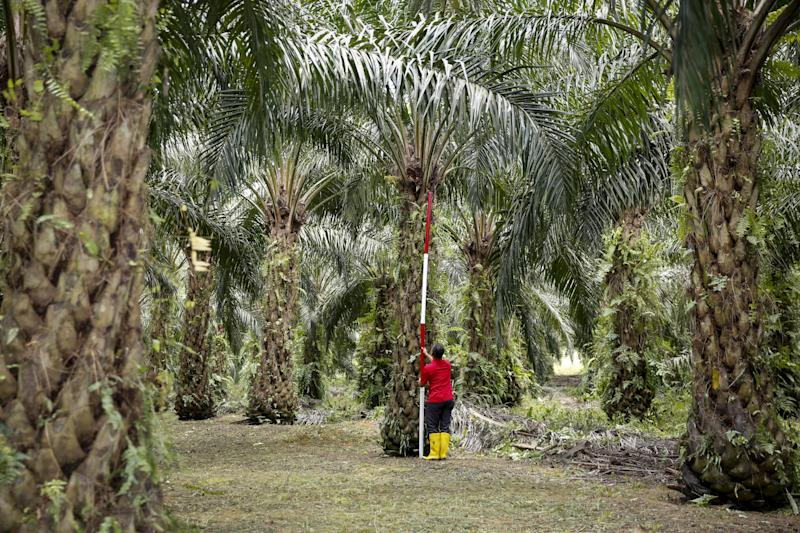 Indonesia Threatens to Ban European Goods in Dispute Over Palm Oil
